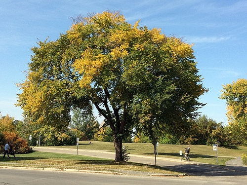 tree branch safety