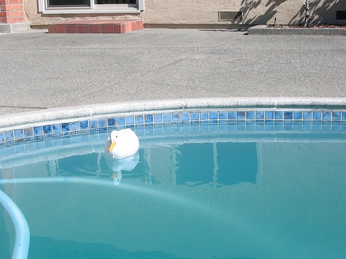 Cloudy Pool Water