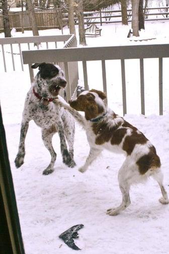 gilman dog attack