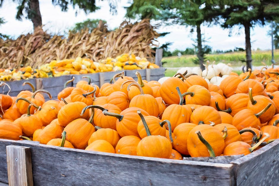 Pumpkin Patch Safety